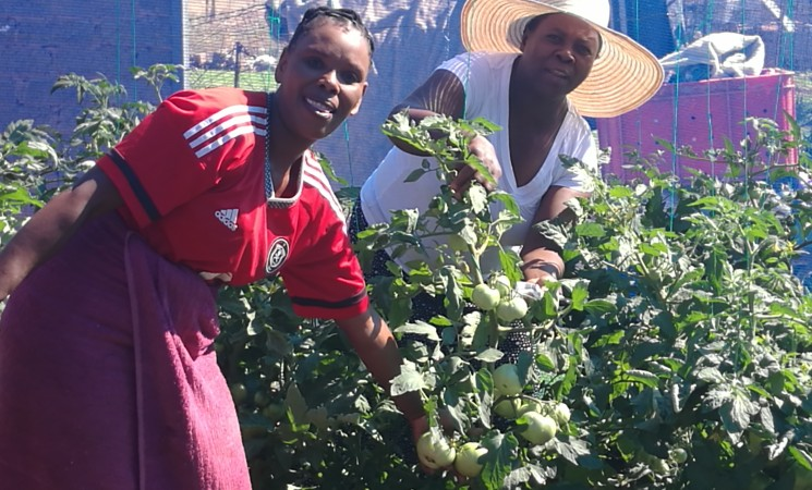 Township Vegetable Tunnel Project